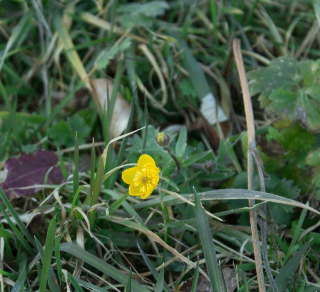 Blume 3