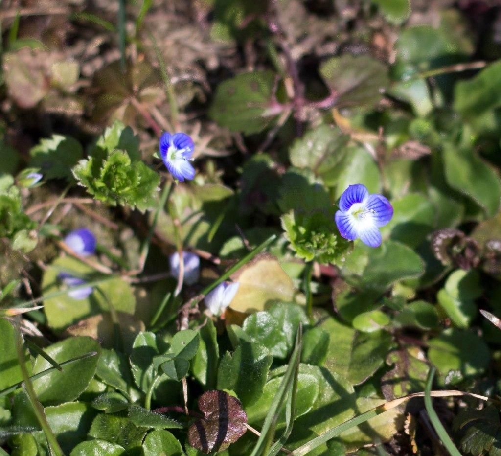 Blume März 1