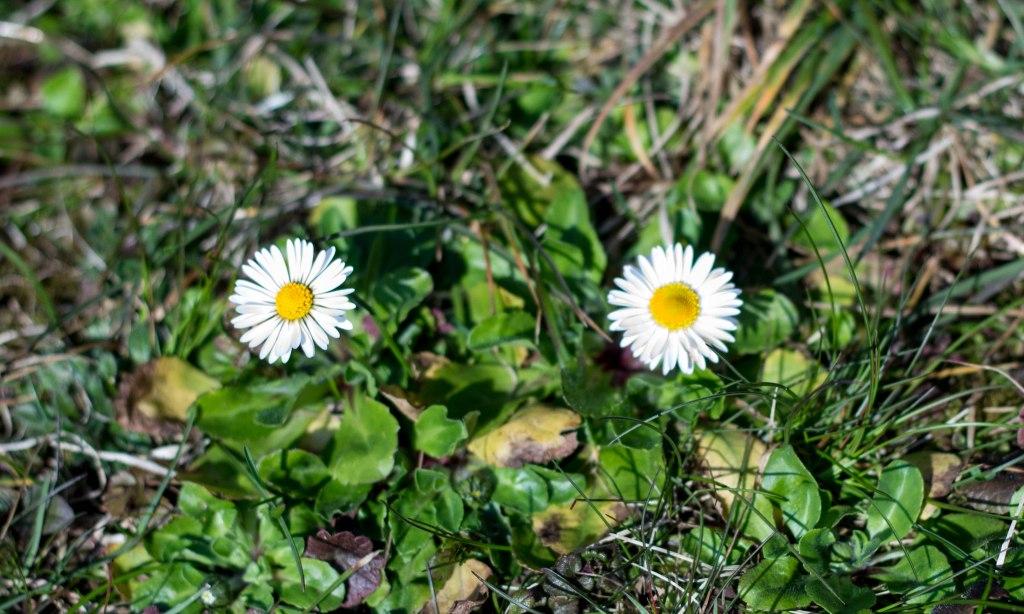 Blume März 4
