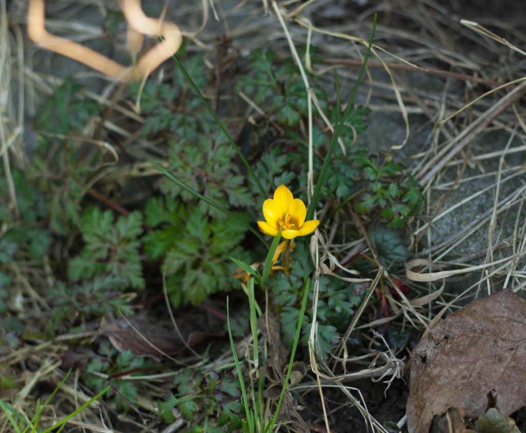Blume März 6